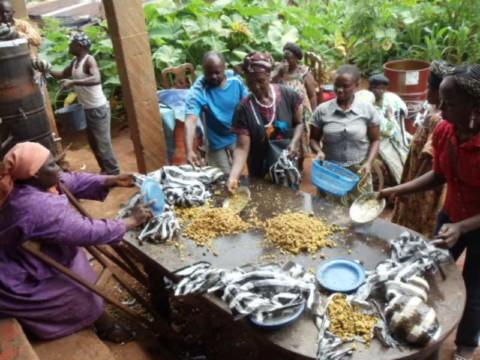 Des femmes handicapées se forment à la culture du champignon