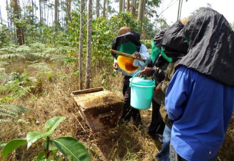 Formation des paysans en technique d'apiculture et de protection de l'environnement